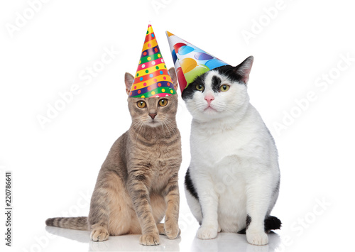 Lovely Cat Couple Wearing Colorful Birthday Hats