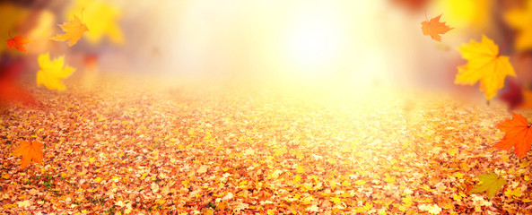 Abstract autum banner/backround
