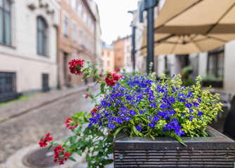 Scenery of the flower bed in the street; Riga, Latvia