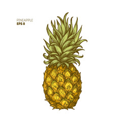Colored pineapple illustration. Vintage tropical fruit.
