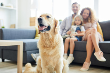 Cute fluffy labrador pet sitting in living-room with family of three on background