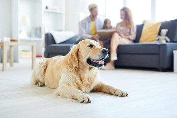 Restful home pet lying on the floor of living-room on background of family relaxing on sofa Wall mural