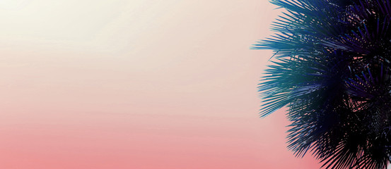 Wall Mural - Tropical website banner with copy space in pink color and palm tree. Concept of Los Angeles and cheap travel agency, blog header and summer vacations.