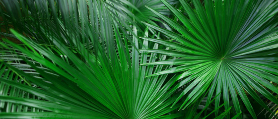 Banner of tropical leaves for background. Concept of summer and travel agency, jungle theme and blog heading. Wall mural