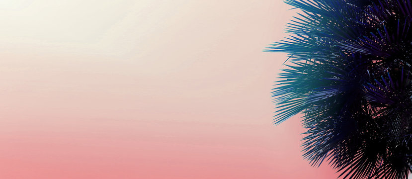 Tropical website banner with copy space in pink color and palm tree. Concept of Los Angeles and cheap travel agency, blog header and summer vacations.