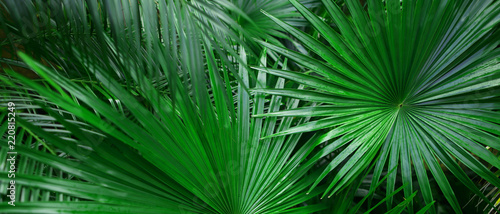 Fotomurales Banner of tropical leaves for background. Concept of summer and travel agency, jungle theme and blog heading.