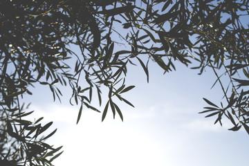 Olive tree leaves pattern