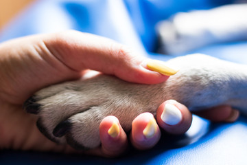 Contact between dog paw and human hand