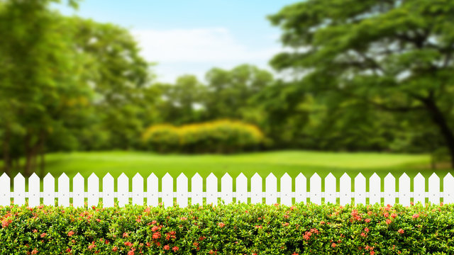 White wooden fence and Green bush wall with blurred green nature background