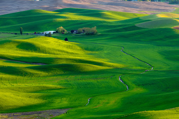 Wall Murals Green The Palouse