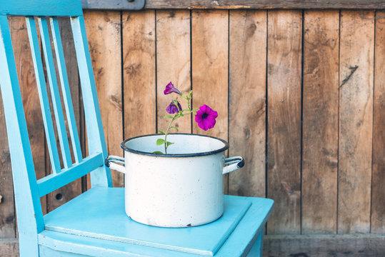 flower in saucepan