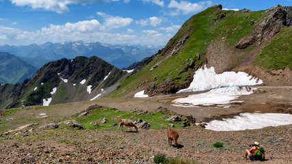 a woman photographing llamas in the mountain
