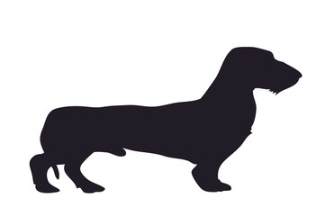 dog stands dachshund, silhouette, vector