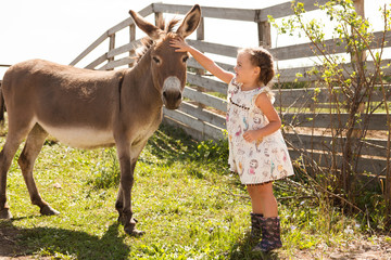 little girl with a donkey is resting  on a farm in the summer