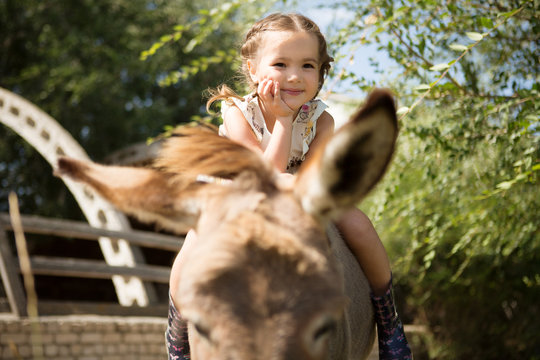 little girl sits on a donkey  is resting on a farm in the summer