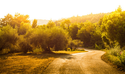 Gold landscape with winding road, hills and olive trees