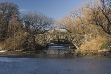 Central Park Pond and Bridge with Skyscapers
