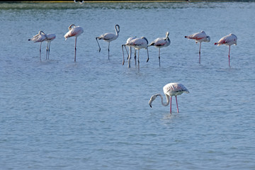 flamingos in the middle of the lake