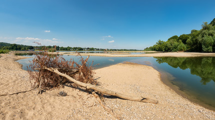 Dried out riverbed with wooden flotsam , Rhine, North Rhine-Westphalia, Germany