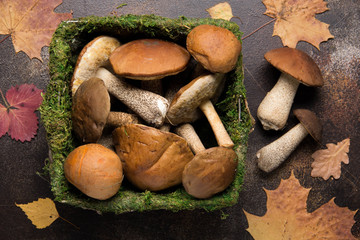 Forest mushrooms in basket with moss, autumn harvest, boletus, white and aspen. Raw fresh mushrooms on a dark background. Dry leaves