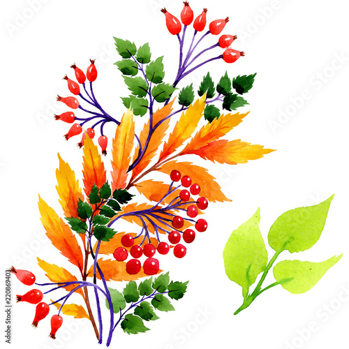 Watercolor Autumn Ornament Of Leaves Leaf Plant Botanical Garden