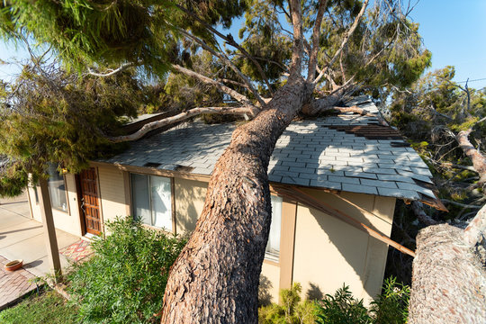 Tree Damage to Roof after Major Monsoon