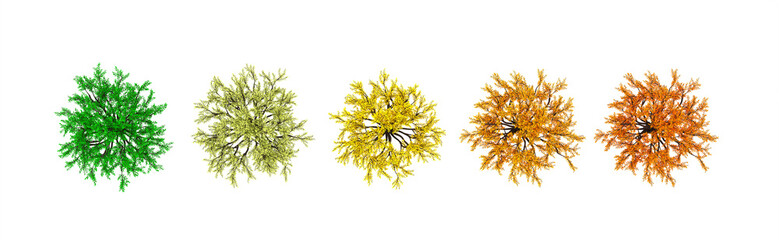 Autumnal element, orange isolated tree on a white background top view. 3d illustration, 3d rendering.