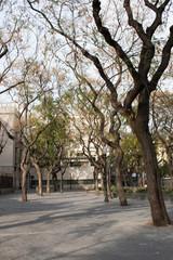 trees along the street