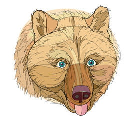 Fantasy illustration of a head of cute brown bear on white background. Hand-drawn vector image.