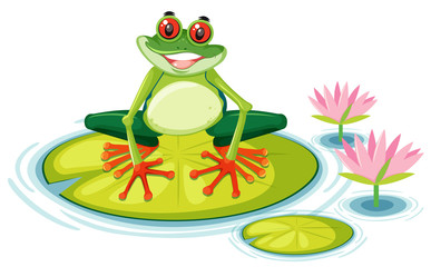 A red eyed tree frog on lily pad