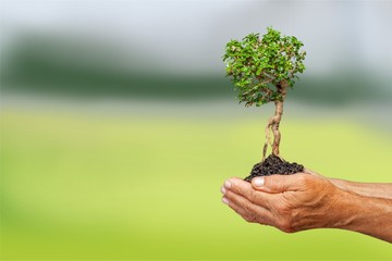 Green Growing Plant in Human Hands on beautiful natural
