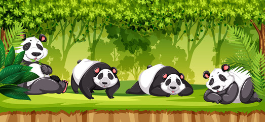 Set of pandas in jungle