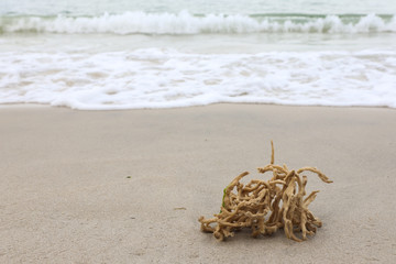 Dead coral on the beach