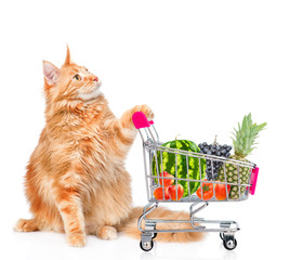 Maine coon cat with shopping trolley looking up. isolated on white background