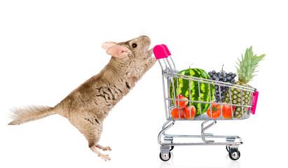 Chinchilla with shopping trolley full of fruits and vegetables. isolated on white background