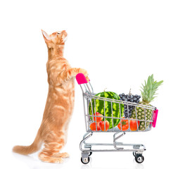Red cat with a shopping cart full of fruits and vegetables looking up. isolated on white background