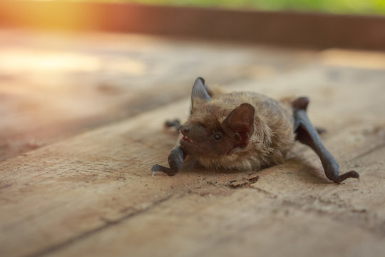 A real bat in nature