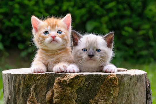 Two baby kittens in a hollowed tree log in a garden