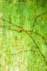 緑色の鉄板と絡まるツタ