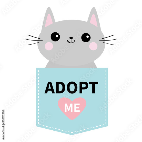 Adopt me. Dont buy. Cat in blue pocket. Pet adoption. Kitten kitty ...