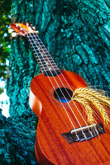 An ukulele guitar with a golden rye spikes. Music, nature and harvesting concept.
