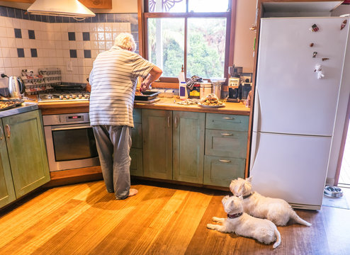 Dogs watching retired owner cooking roast meal for Sunday lunch in domestic kitchen at home