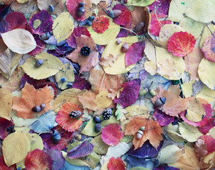 autumn leaves with water drops
