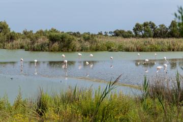 Beautiful Flamingo Birds 4