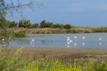 Beautiful Flamingo Birds 5