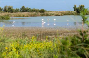 Beautiful Flamingo Birds 6