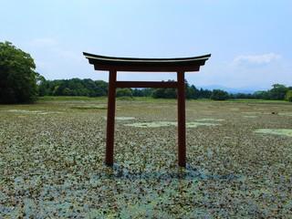 大貞八幡薦神社 鳥居 大分県 日本