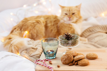 Fototapete - hygge and christmas concept - oatmeal cookies, candle in holder, fir twig decoration and cat in bed