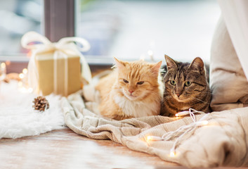 Fototapete - pets, christmas and hygge concept - two cats lying on window sill with blanket and present at home