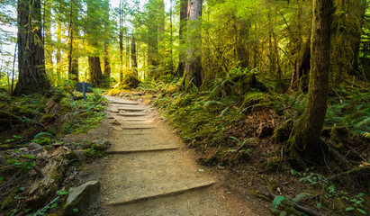 scenic view of path way in the forest with sun light.